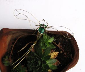Tiski cvet veći-zelena